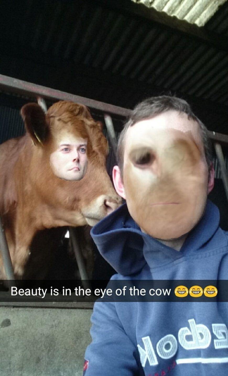 Cowswap