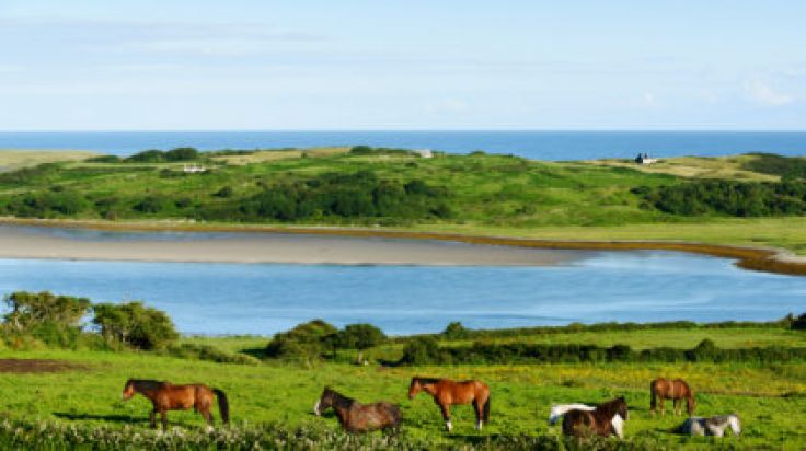 Online Chat & Dating in Sligo   Meet Men & Women in Sligo
