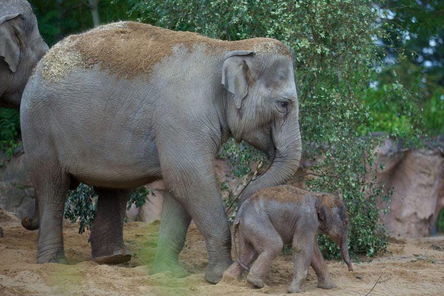 Dublin Zoo Elephant01