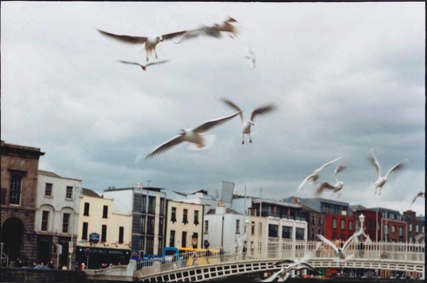 Dublin Seagulls