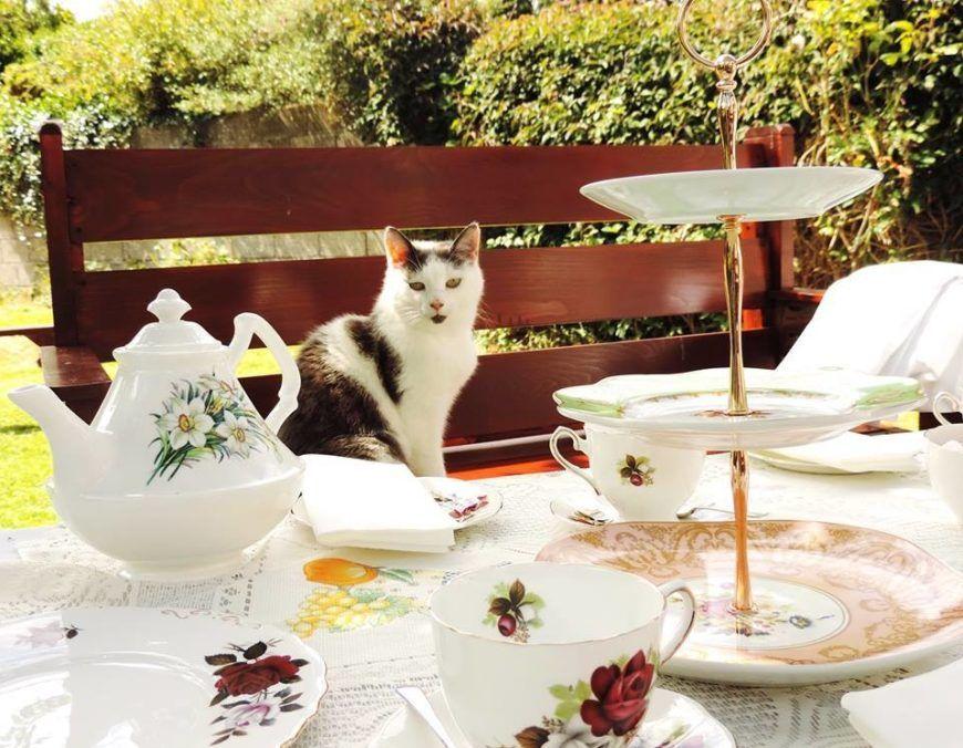 6  Social Bee Back Garden Tea Party