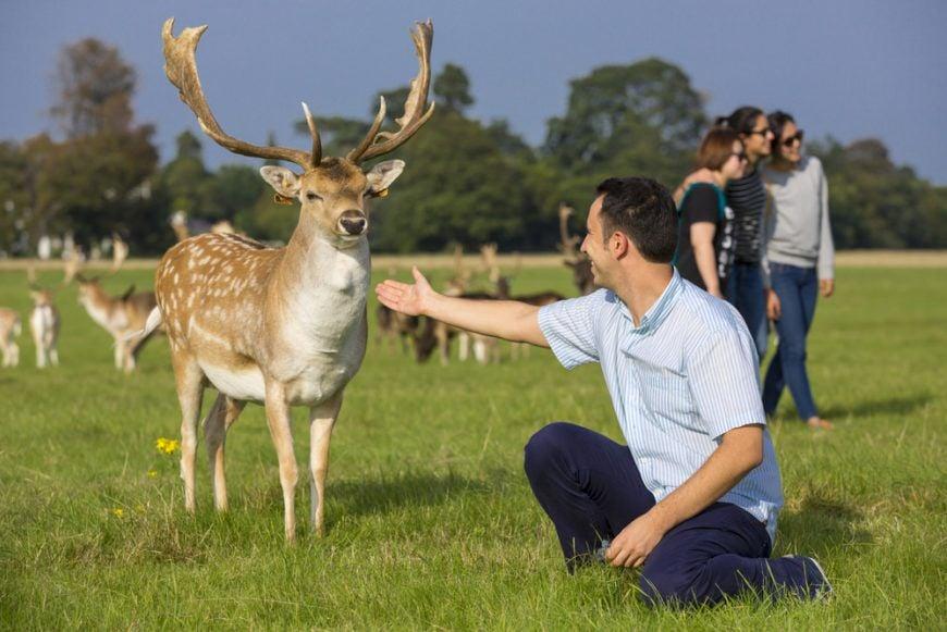 Deer And Man