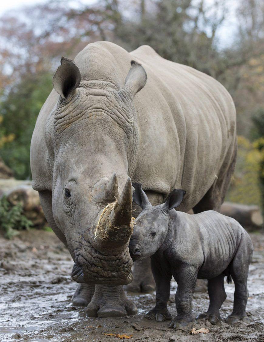 Dublin Zoo Rhino04