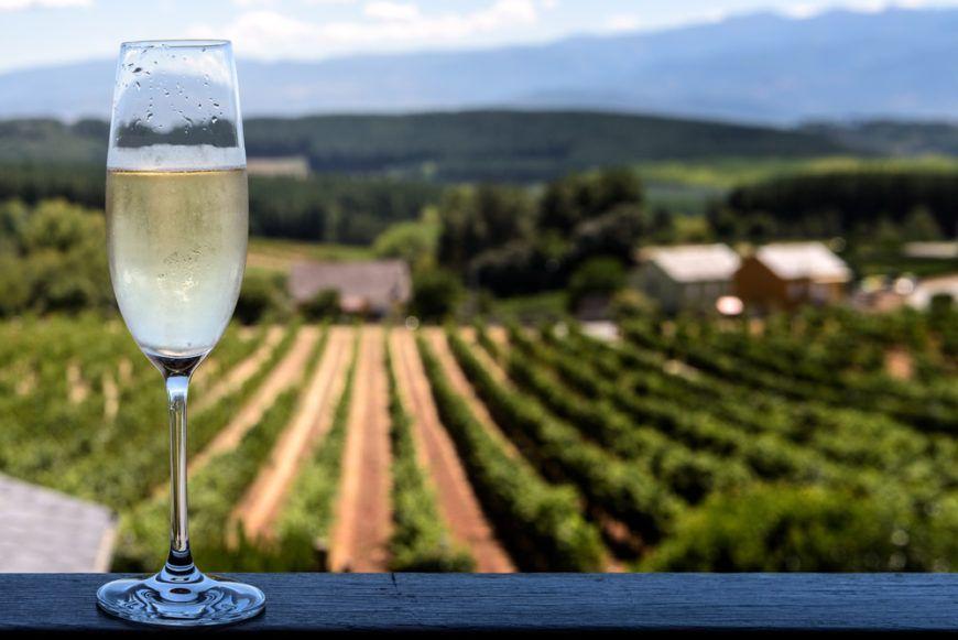 Sparkling Wine Vineyard