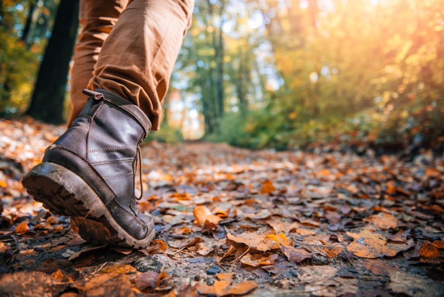 Shutterstock 512245618