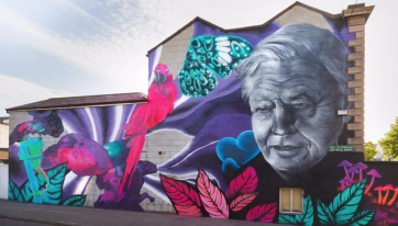 Devastation As Dublin City Council Orders Removal Of Subset's David Attenborough Mural