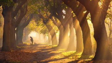 The Best Places To Capture Stunning Autumnal Photos In Dublin