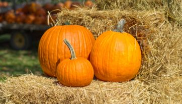 Get Your Creative Juices Flowing With A Pumpkin Decorating Competition At The National Botanic Gardens