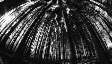 There's a terrifying 'Blair Witch' experience happening in Dublin this weekend