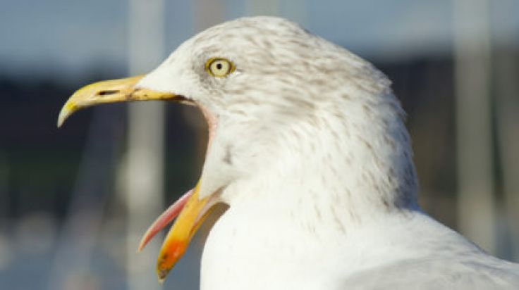 PIC: This Terrifying Photo Of A Dublin Seagull EATING A BIRD