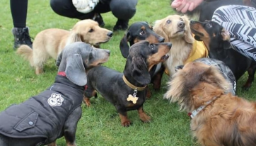 PSA: There Is A Sausage Dog Social Club In Dublin And It's Too ADORABLE