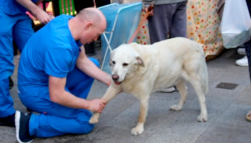 WATCH: These Dublin Vets Volunteer To Look After Homeless Peoples' Pets On The Streets of The City