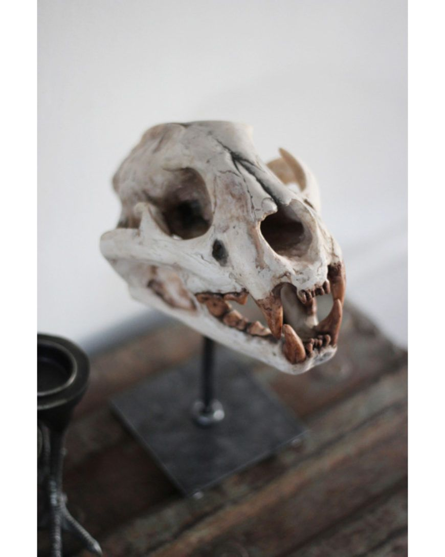Image-4-April-and-The-Bear-skull
