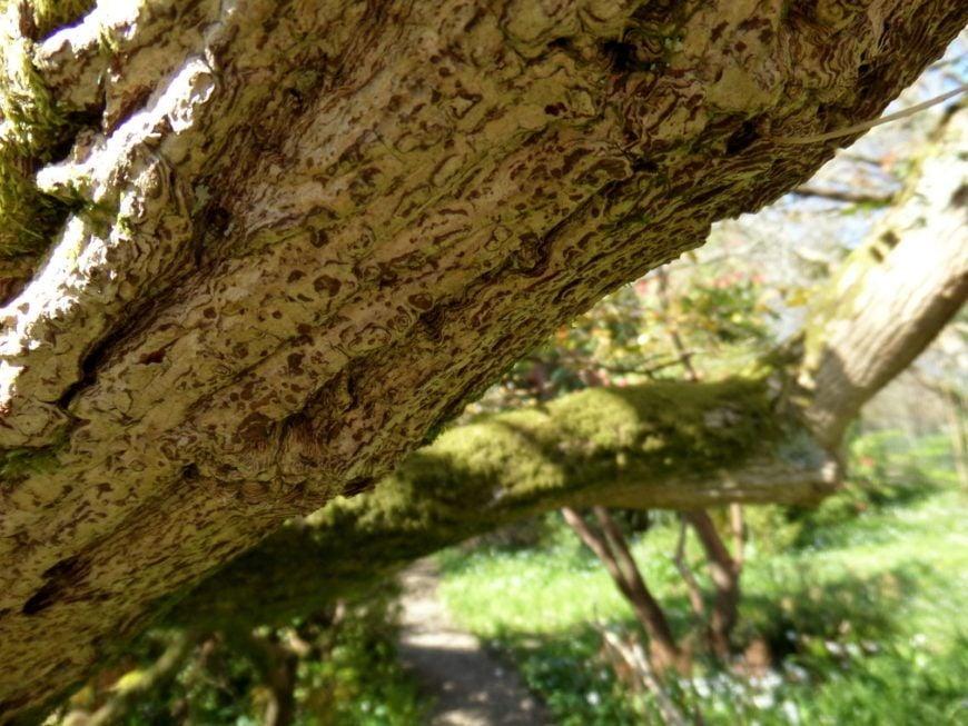 PIC-7-Tree-Close-Up