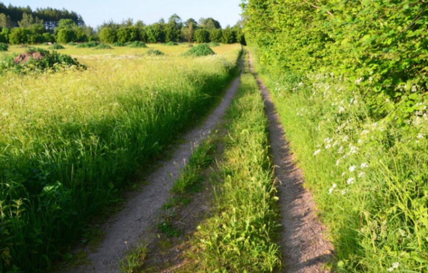 Grassy-road