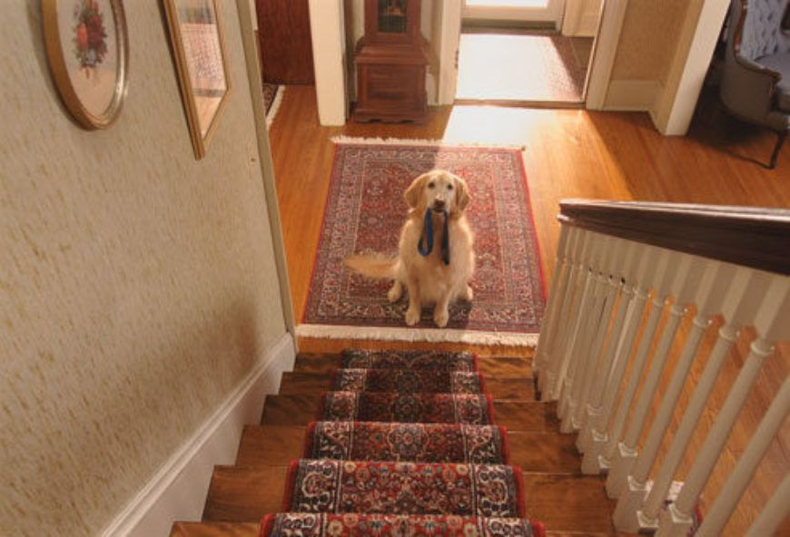 getty rm photo of dog at bottom of stairs