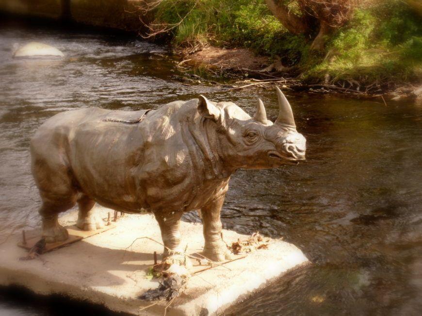 13 Rhino