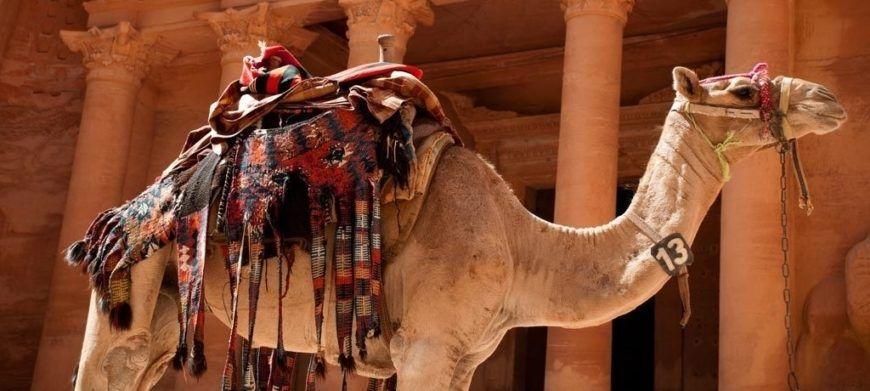 Jordan Petra Treasury Camel 1024X460