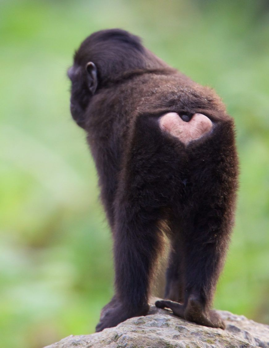 Dublin Zoo Valentines