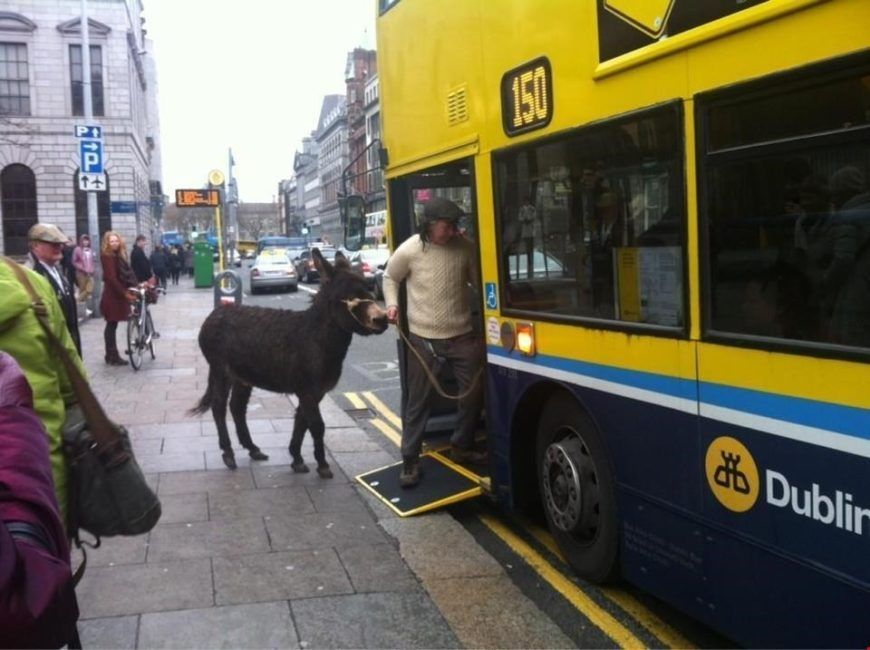 Dublin Donkey Picture Twitter Large