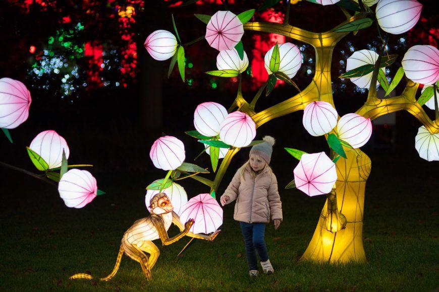Dublin Zoo Wild Lights02 1