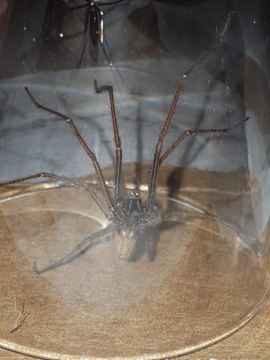 Spider Main
