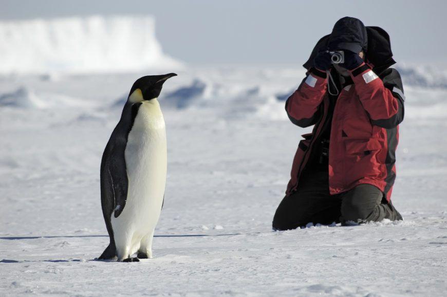 Antarctica Tourist