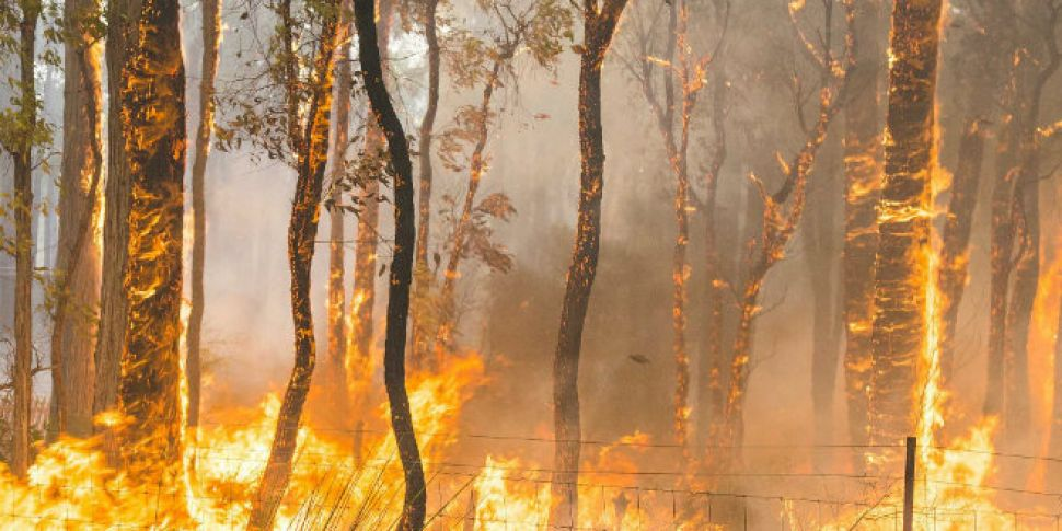 Bushfires in Australia destroy...