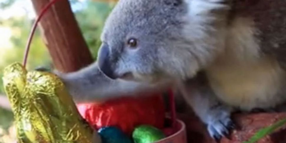 WATCH: Animals at Australia wi...