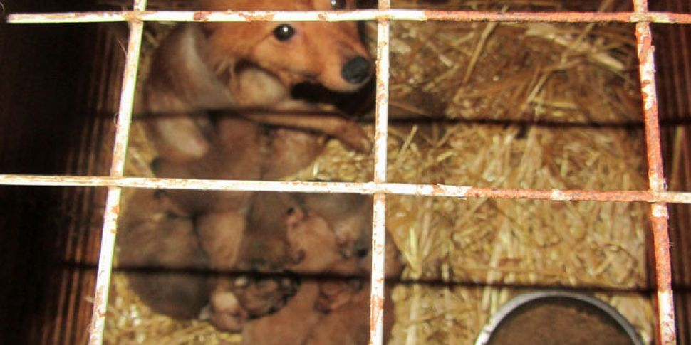 WATCH: ISPCA calls for action...