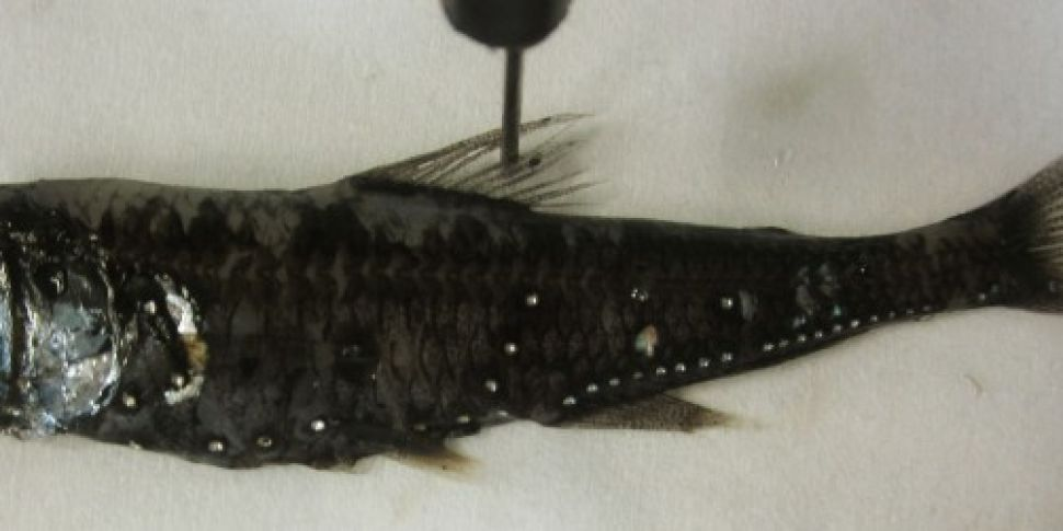 Study finds that 73% of fish i...