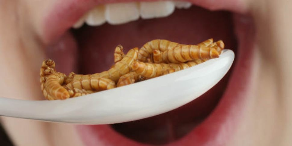 Why eating insects causes us s...