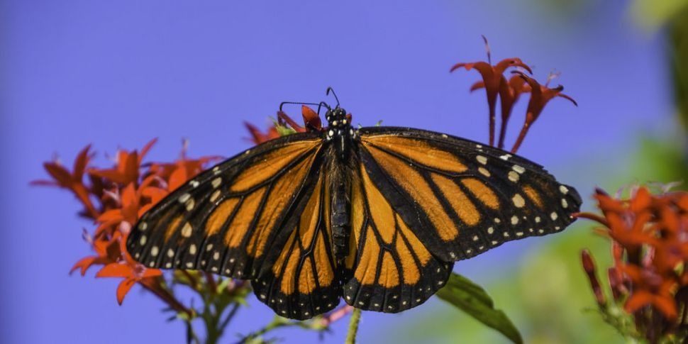 Futureproof Extra: The Monarch...