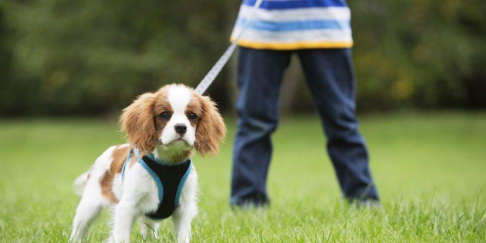 Does Ireland need stricter Dog...