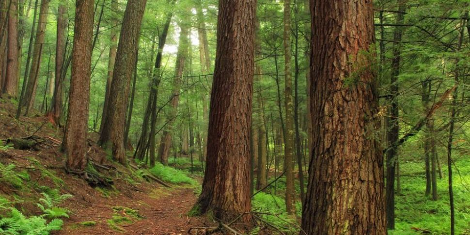 Body Image, Forest Bathing and...