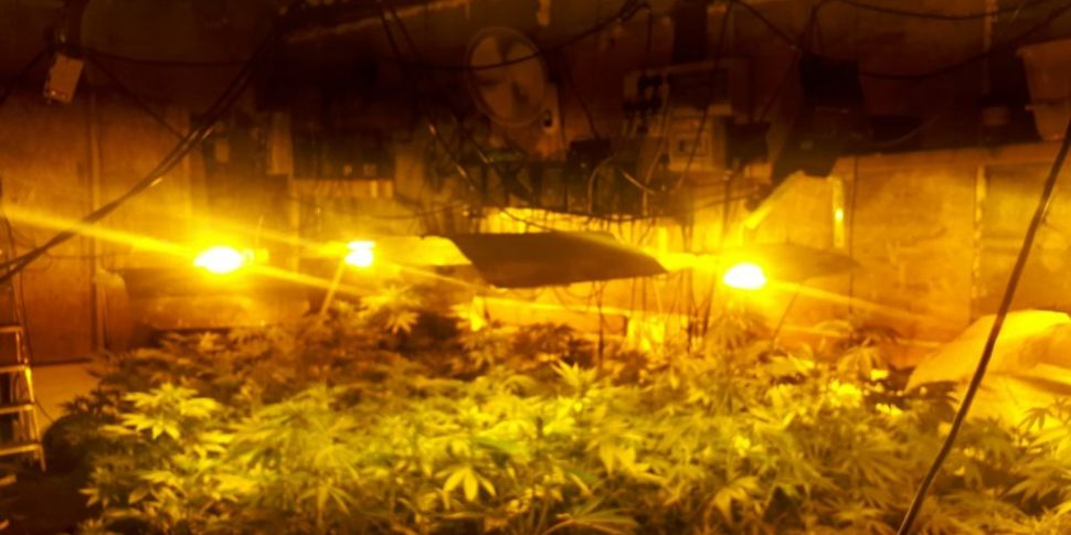 Over €90,000 of cannabis plant...