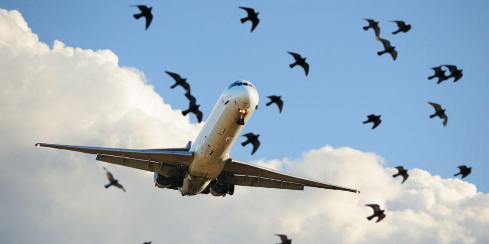 Birdstrike: