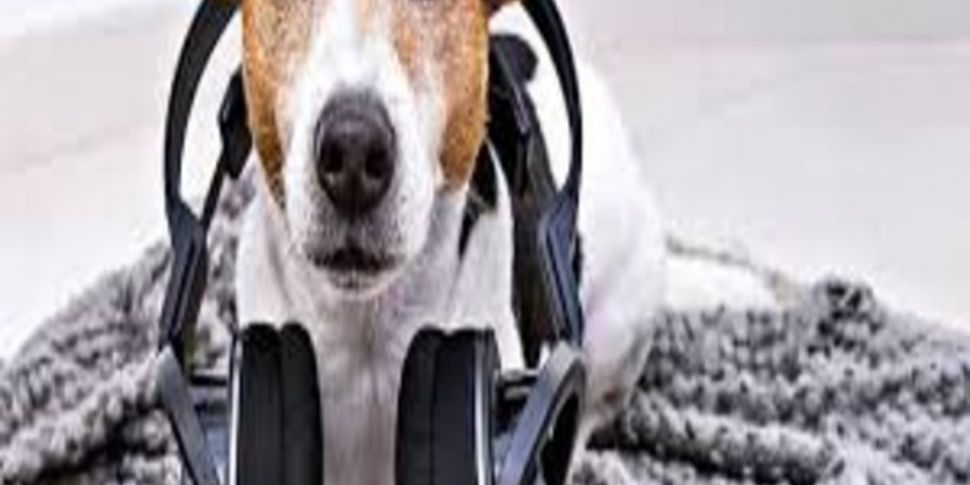 A podcast for when your dog is...