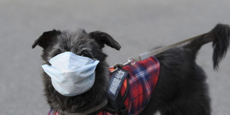 Pet dog tests positive for COV...