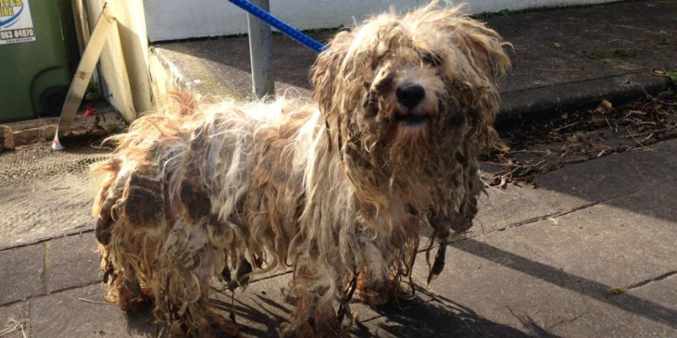 Two Dogs Rescued From Horrific Hair Matting In Limerick Newstalk