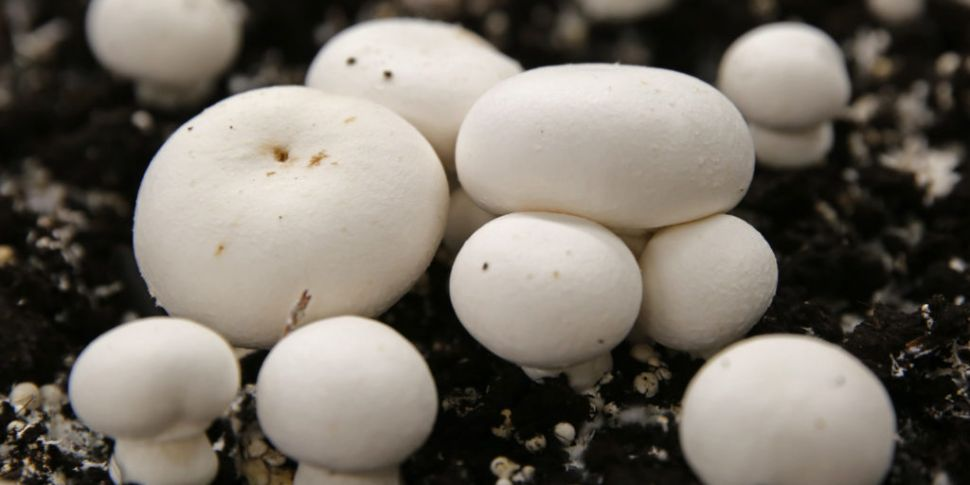 Mushroom plant in Tipperary su...