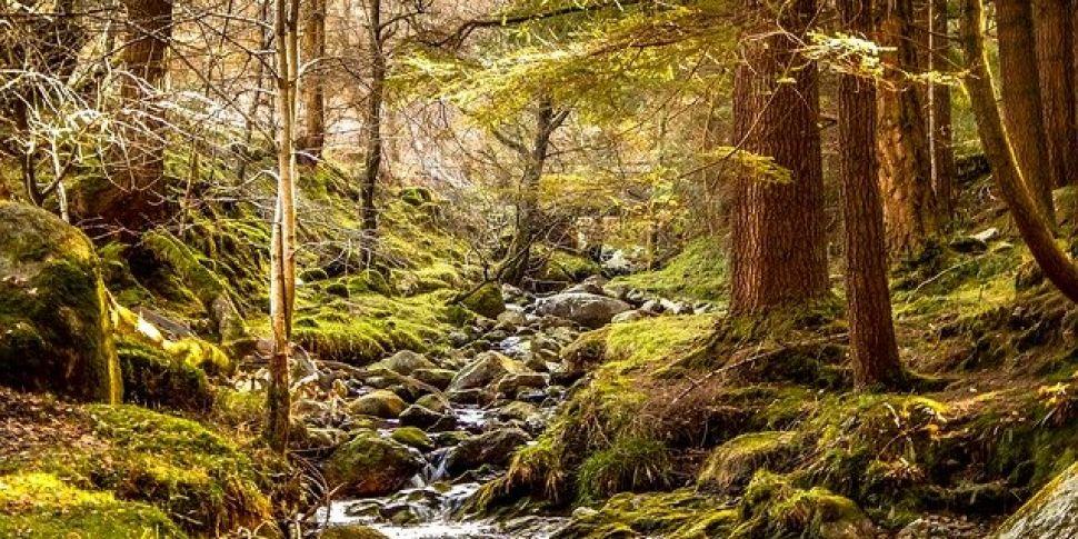 Reforesting Ireland & Reversin...