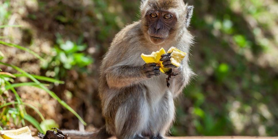 Bartering Monkeys