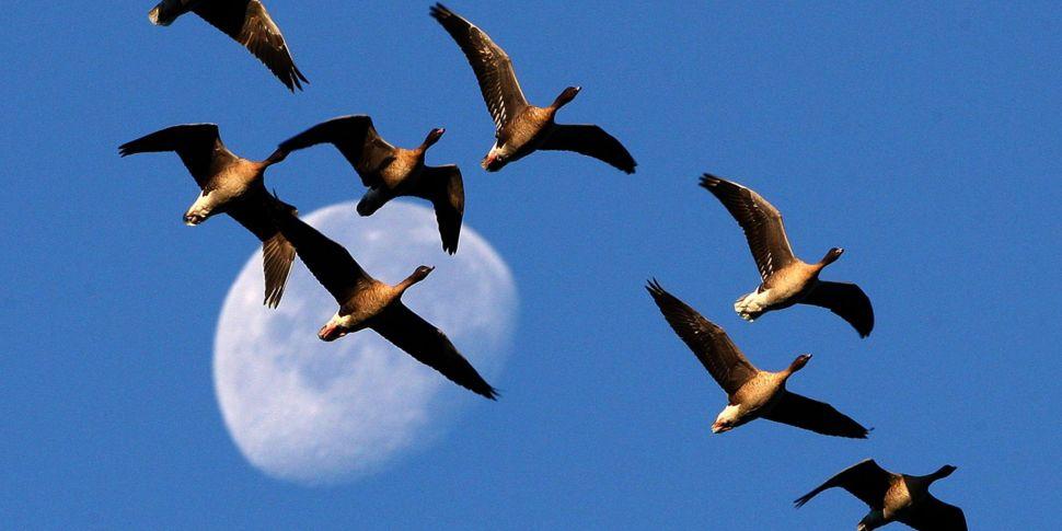 Migration In The Animal Kingdo...