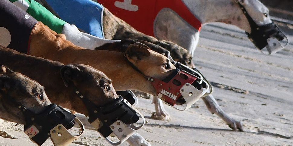 Is The Greyhound Industry A Dy...