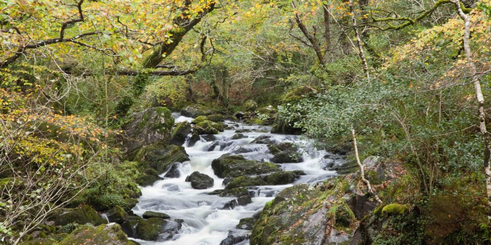 Why rewilding Ireland is about...