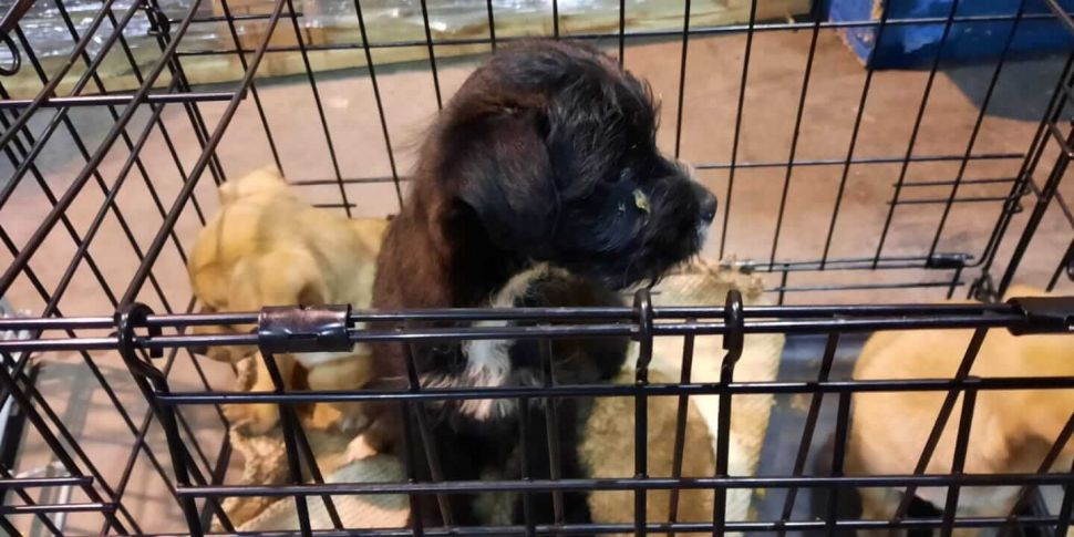 People urged not to buy dogs o...