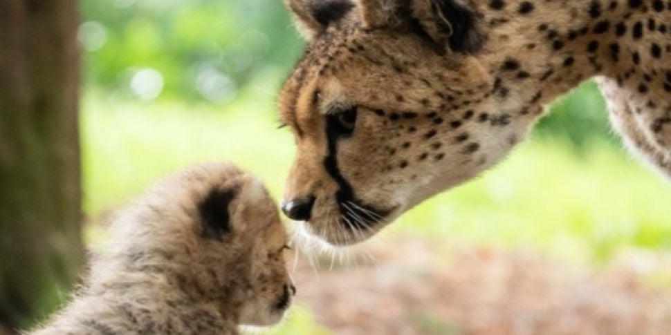 Fota Wildlife Park facing fund...