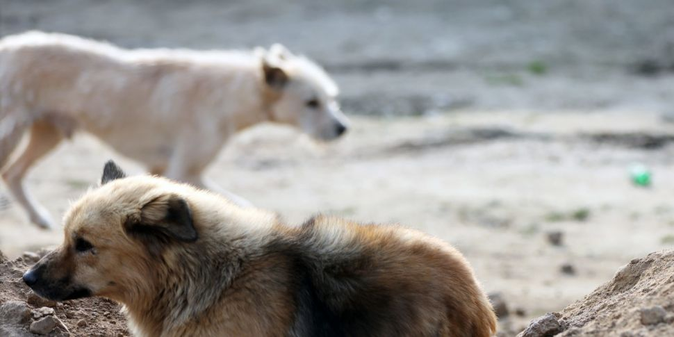 The Stray Dogs of Istanbul