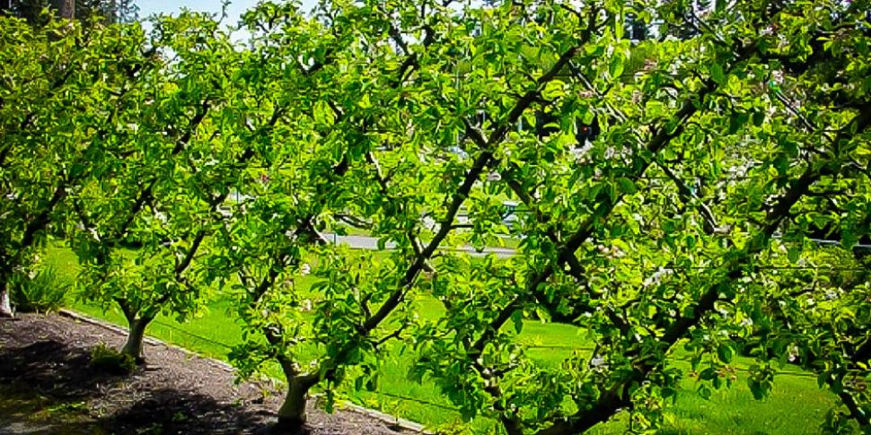 Gardening Tips With Paraic Hor...